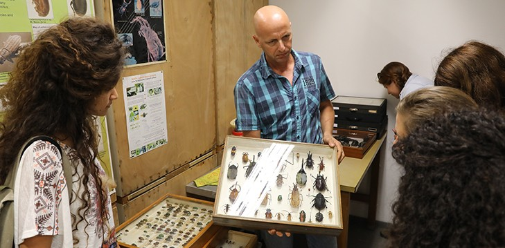 The School's arthropod collection has been transferred to the Museum for preservation
