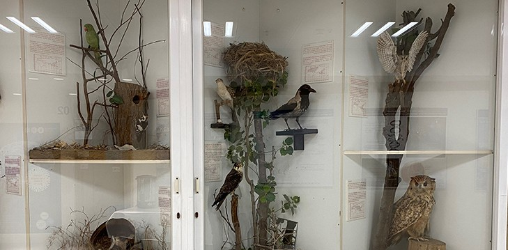Entrance hall to the School:  nesting and incubation among the birds of Israel