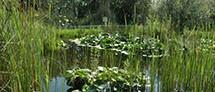 The Yehuda Naftali Botanic Garden