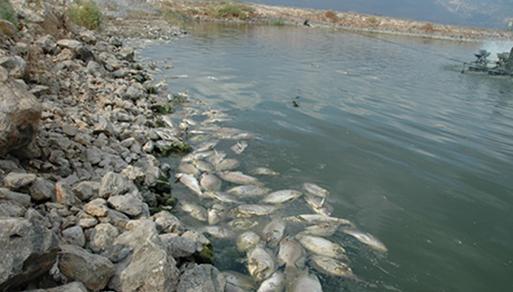 Tilapia Lake Virus research is one of most impactful research projects granted by BARD