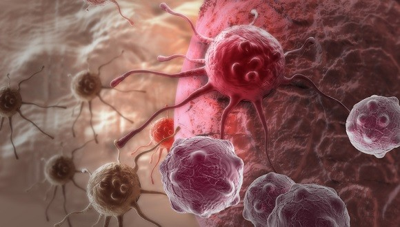 Cancer, Cell Biology, and Immunology