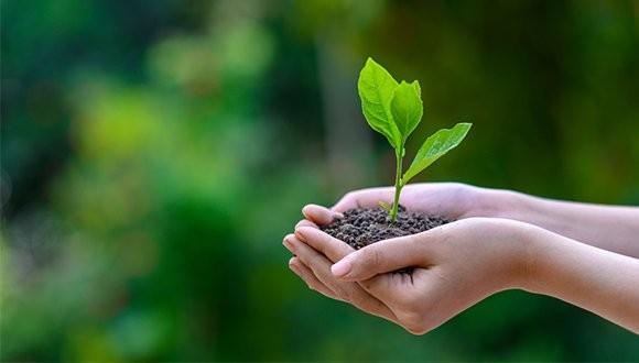 The Human-Environment Interrelationship