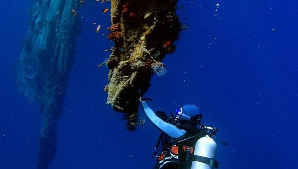Gal Vered during her research work at the Gulf of Eilat (photo: Hila Dror)