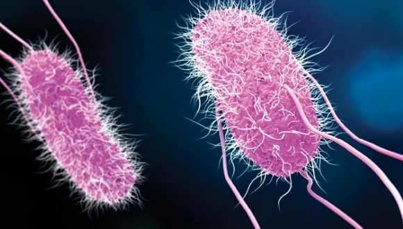 It turns out that hackers have a lot to learn from bacteria
