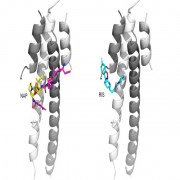 docking peptide to protein