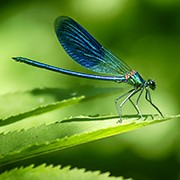 Nature-inspired Technology (Biomimicry)